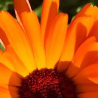 Danlyn B. profile image