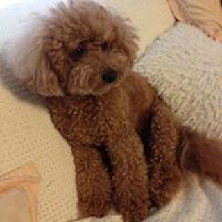 Yuka H. profile image