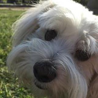 Petey H. profile image
